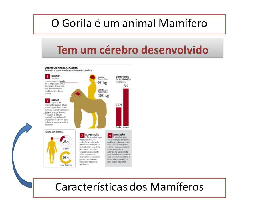 O Gorila é um animal Mamífero Características dos Mamíferos Tem o corpo coberto de pêlos Tem o corpo coberto de pêlos