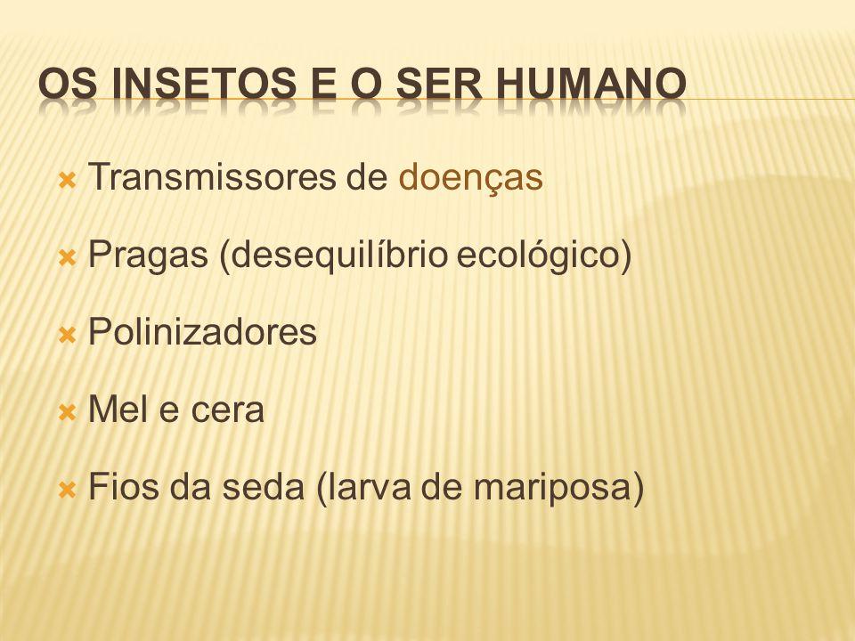  Transmissores de doenças  Pragas (desequilíbrio ecológico)  Polinizadores  Mel e cera  Fios da seda (larva de mariposa)