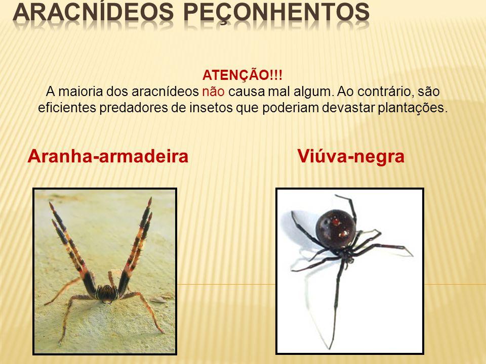 ATENÇÃO!!! A maioria dos aracnídeos não causa mal algum. Ao contrário, são eficientes predadores de insetos que poderiam devastar plantações. Aranha-a