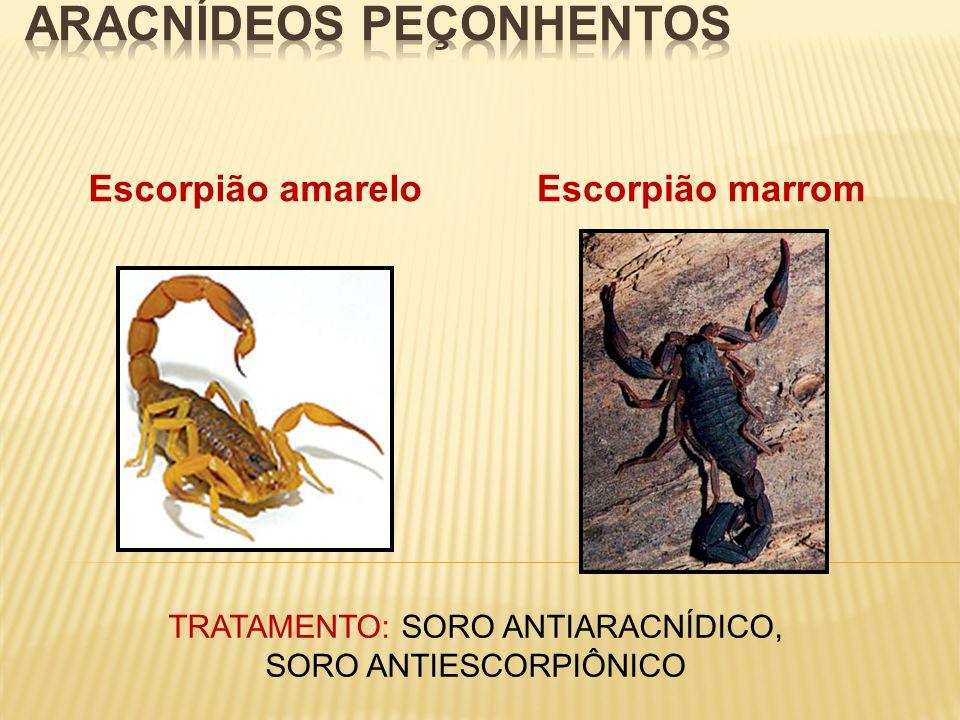 Escorpião amareloEscorpião marrom TRATAMENTO: SORO ANTIARACNÍDICO, SORO ANTIESCORPIÔNICO