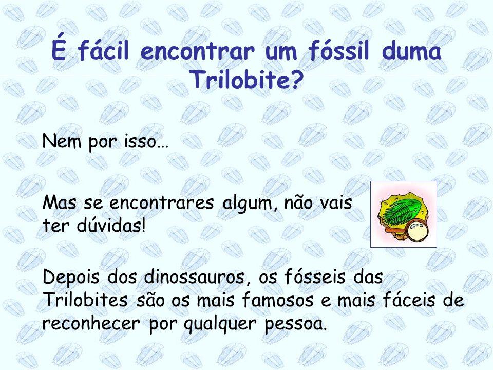 Mas se encontrares algum, não vais ter dúvidas! Nem por isso… Depois dos dinossauros, os fósseis das Trilobites são os mais famosos e mais fáceis de r