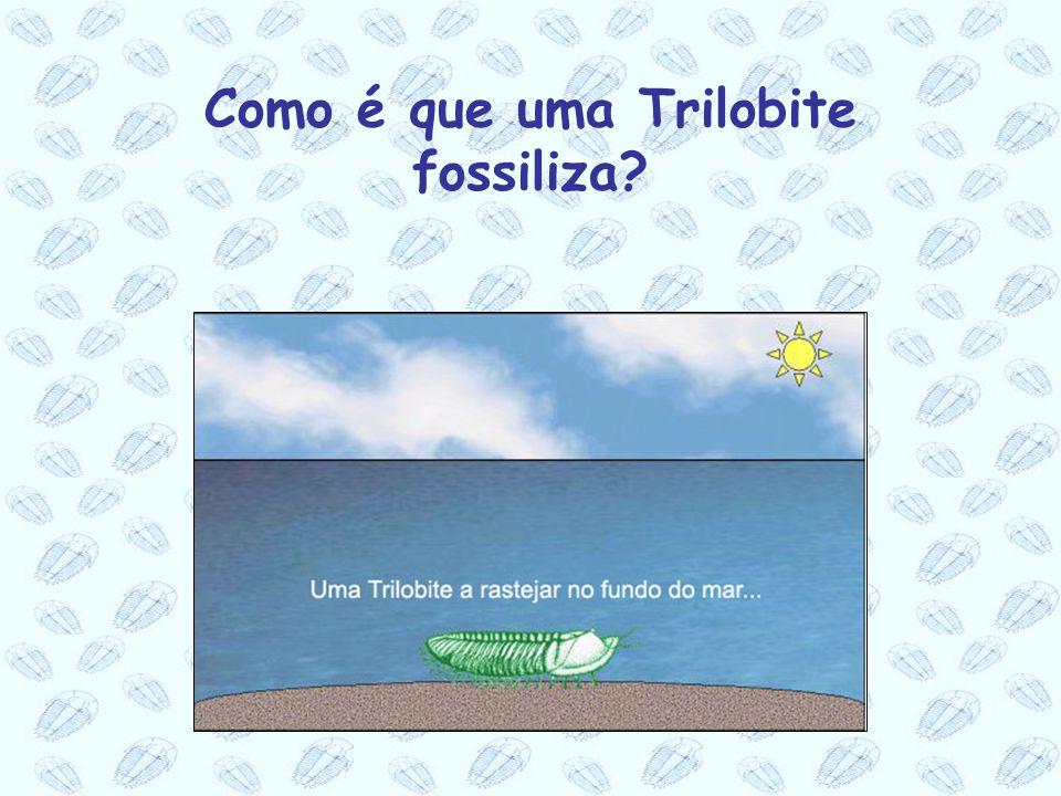 Como é que uma Trilobite fossiliza?