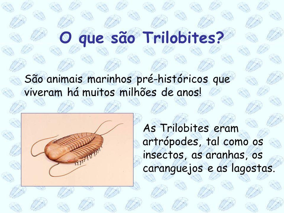 São animais marinhos pré-históricos que viveram há muitos milhões de anos! As Trilobites eram artrópodes, tal como os insectos, as aranhas, os carangu