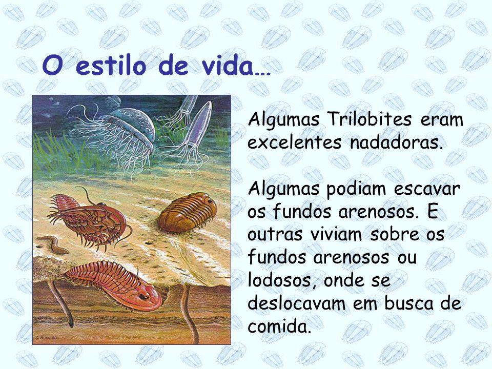 Algumas Trilobites eram excelentes nadadoras. Algumas podiam escavar os fundos arenosos. E outras viviam sobre os fundos arenosos ou lodosos, onde se