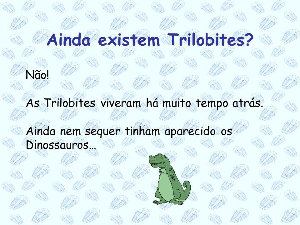 Não! As Trilobites viveram há muito tempo atrás. Ainda nem sequer tinham aparecido os Dinossauros… Ainda existem Trilobites?