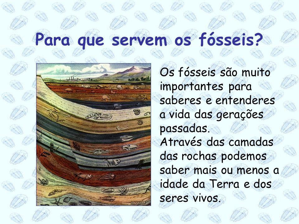 Os fósseis são muito importantes para saberes e entenderes a vida das gerações passadas. Através das camadas das rochas podemos saber mais ou menos a