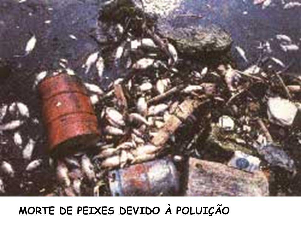 MORTE DE PEIXES DEVIDO À POLUIÇÃO
