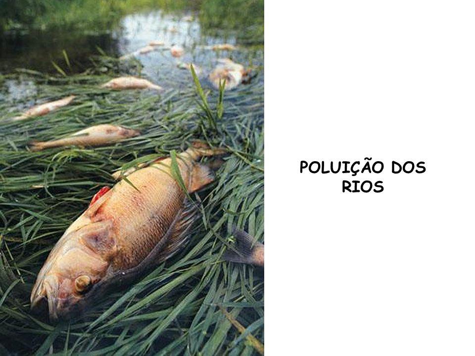 POLUIÇÃO DOS RIOS