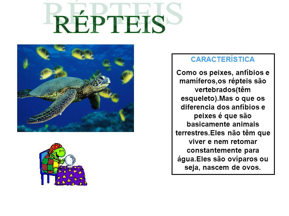 CARACTERÍSTICA Como os peixes, anfíbios e mamíferos,os répteis são vertebrados(têm esqueleto).Mas o que os diferencia dos anfíbios e peixes é que são