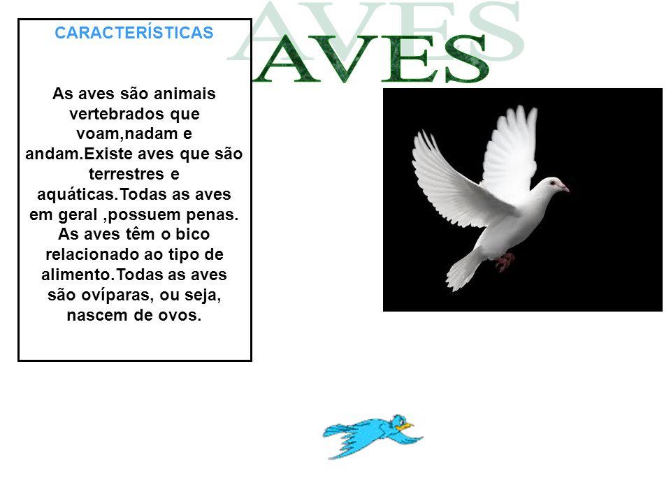 CARACTERÍSTICAS As aves são animais vertebrados que voam,nadam e andam.Existe aves que são terrestres e aquáticas.Todas as aves em geral,possuem penas