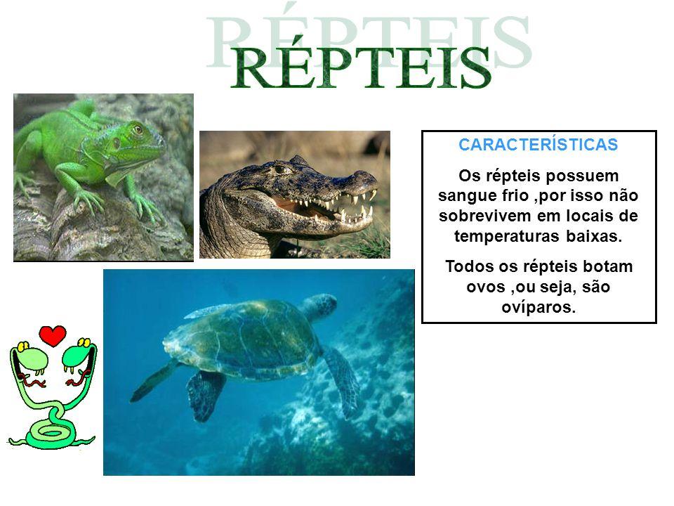 CARACTERÍSTICAS Os répteis possuem sangue frio,por isso não sobrevivem em locais de temperaturas baixas. Todos os répteis botam ovos,ou seja, são ovíp