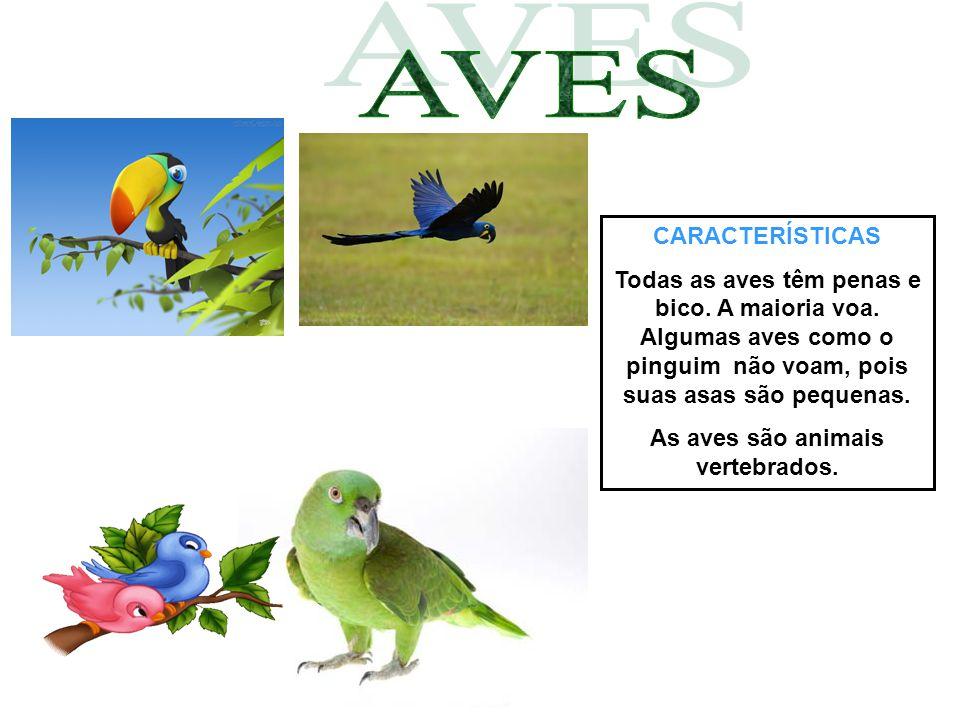 CARACTERÍSTICAS Todas as aves têm penas e bico. A maioria voa. Algumas aves como o pinguim não voam, pois suas asas são pequenas. As aves são animais