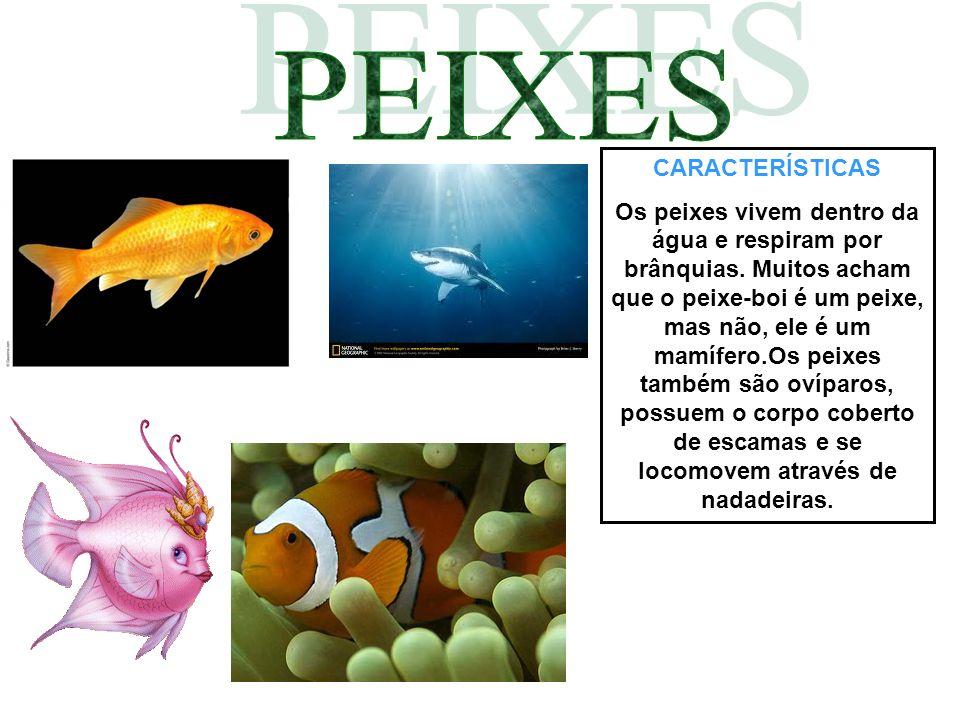 CARACTERÍSTICAS Os peixes vivem dentro da água e respiram por brânquias. Muitos acham que o peixe-boi é um peixe, mas não, ele é um mamífero.Os peixes