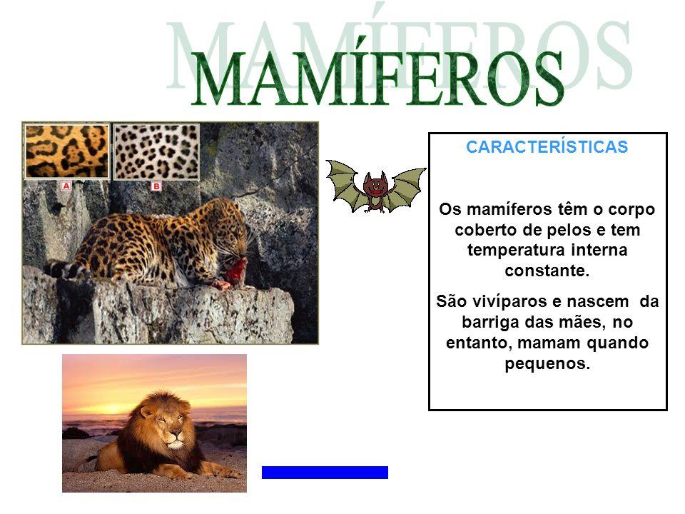 CARACTERÍSTICAS Os mamíferos têm o corpo coberto de pelos e tem temperatura interna constante. São vivíparos e nascem da barriga das mães, no entanto,