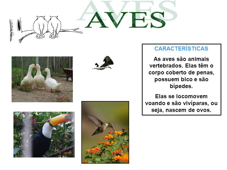 CARACTERÍSTICAS As aves são animais vertebrados. Elas têm o corpo coberto de penas, possuem bico e são bípedes. Elas se locomovem voando e são vivípar