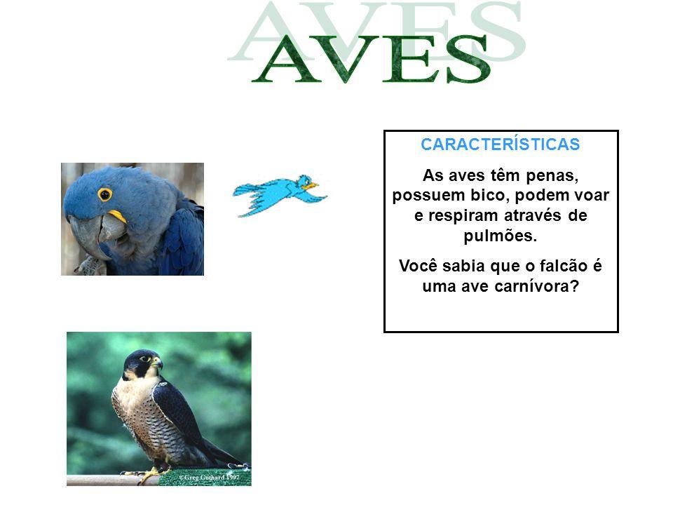 CARACTERÍSTICAS As aves têm penas, possuem bico, podem voar e respiram através de pulmões. Você sabia que o falcão é uma ave carnívora?