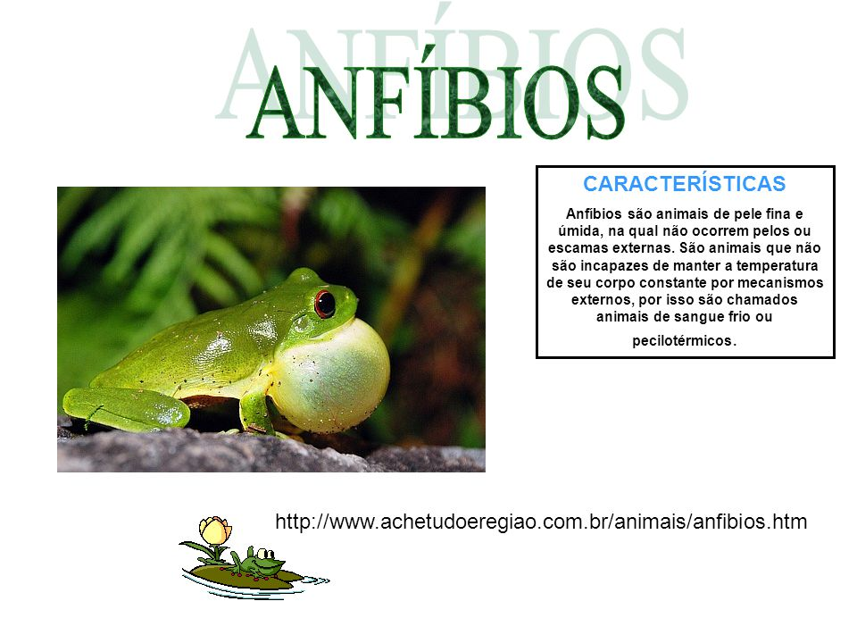 CARACTERÍSTICAS São animais vertebrados (há presença de coluna vertebral segmentada).
