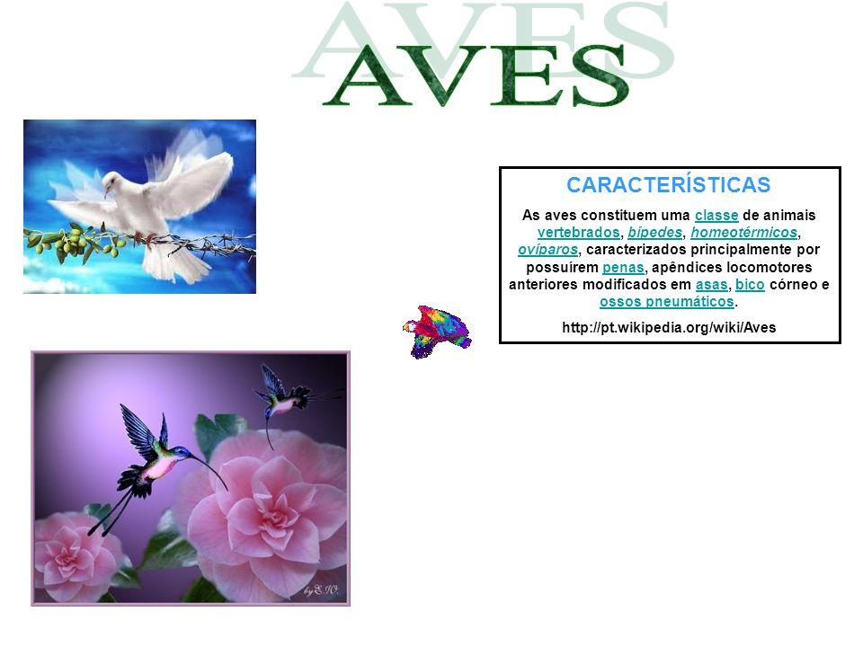 CARACTERÍSTICAS As aves constituem uma classe de animais vertebrados, bípedes, homeotérmicos, ovíparos, caracterizados principalmente por possuírem pe