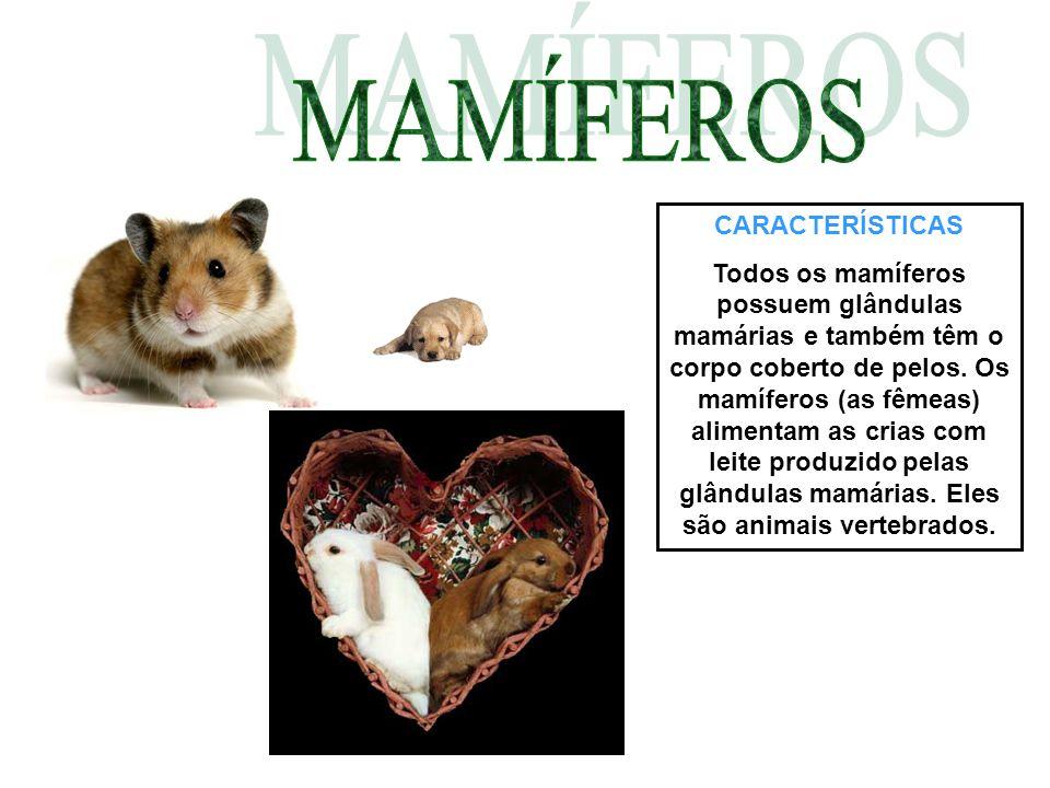 CARACTERÍSTICAS Todos os mamíferos possuem glândulas mamárias e também têm o corpo coberto de pelos. Os mamíferos (as fêmeas) alimentam as crias com l