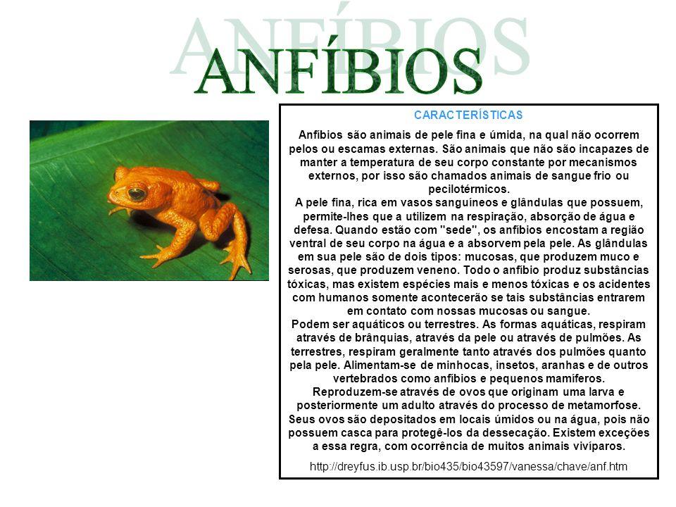 CARACTERÍSTICAS Anfíbios são animais de pele fina e úmida, na qual não ocorrem pelos ou escamas externas. São animais que não são incapazes de manter
