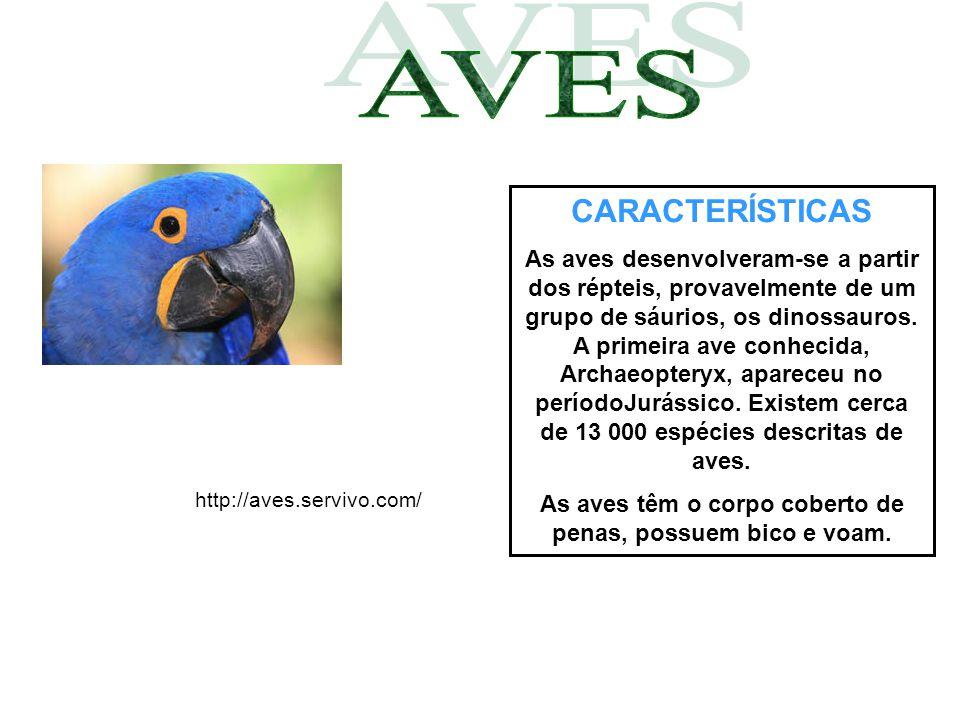 CARACTERÍSTICAS As aves desenvolveram-se a partir dos répteis, provavelmente de um grupo de sáurios, os dinossauros. A primeira ave conhecida, Archaeo