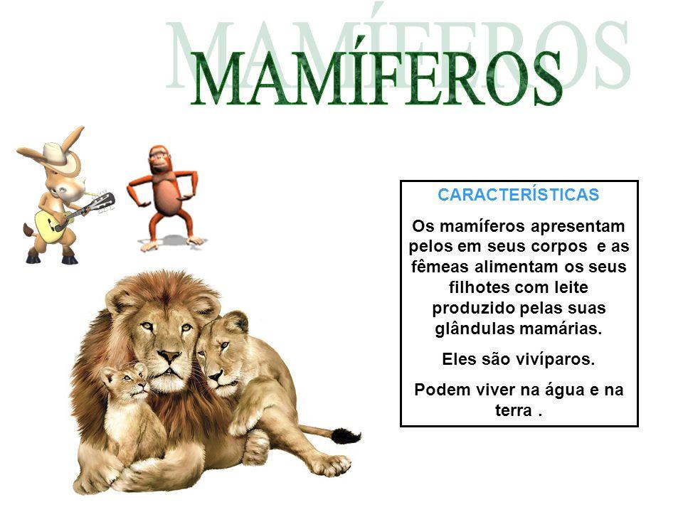 CARACTERÍSTICAS Os mamíferos apresentam pelos em seus corpos e as fêmeas alimentam os seus filhotes com leite produzido pelas suas glândulas mamárias.