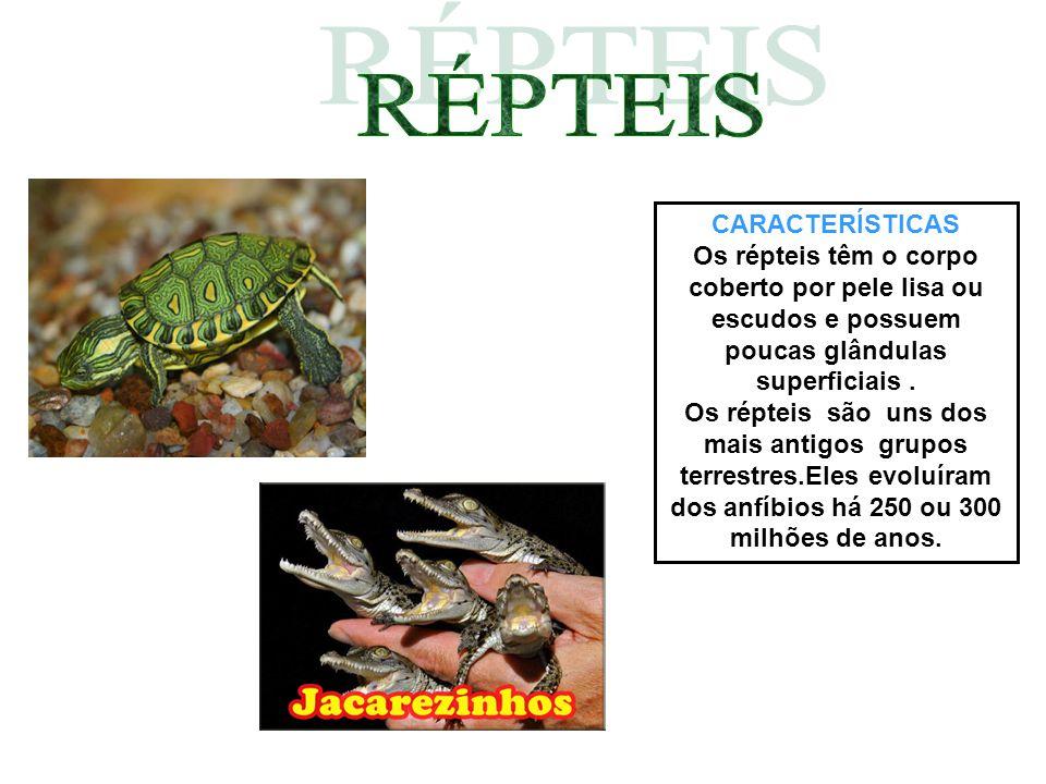 CARACTERÍSTICAS Os répteis têm o corpo coberto por pele lisa ou escudos e possuem poucas glândulas superficiais. Os répteis são uns dos mais antigos g