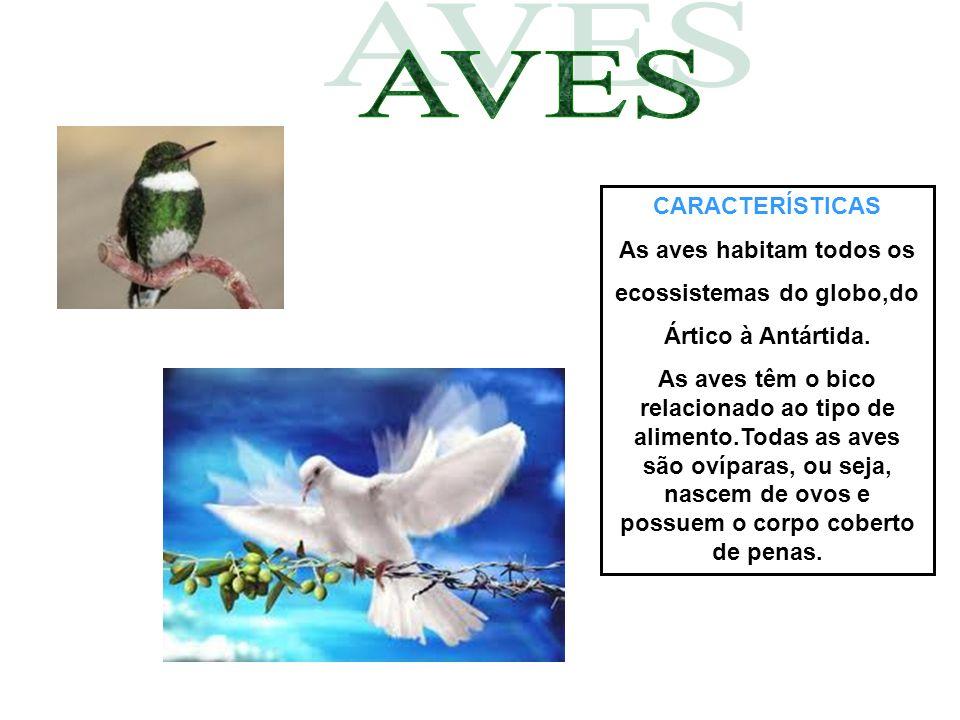 CARACTERÍSTICAS As aves habitam todos os ecossistemas do globo,do Ártico à Antártida. As aves têm o bico relacionado ao tipo de alimento.Todas as aves