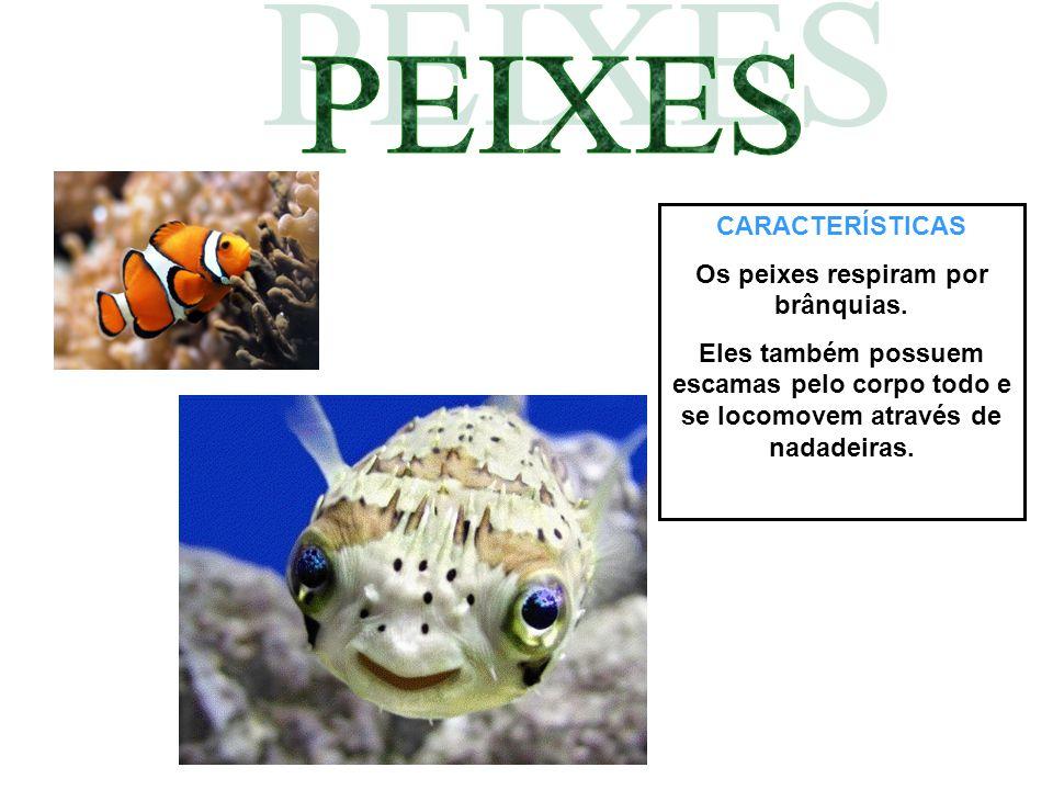 CARACTERÍSTICAS Os peixes respiram por brânquias. Eles também possuem escamas pelo corpo todo e se locomovem através de nadadeiras.
