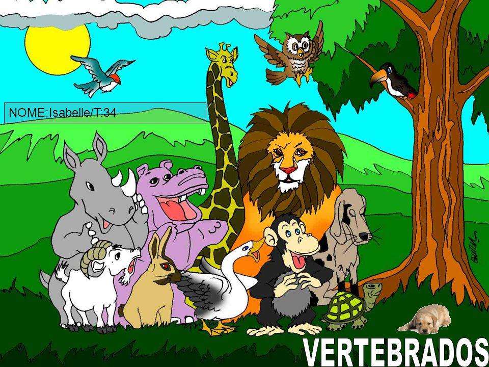 CARACTERÍSTICA Os mamíferos possuem o corpo coberto de pelos e são vivíparos, ou seja, nascem da barriga da mãe.Eles são animais vertebrados.