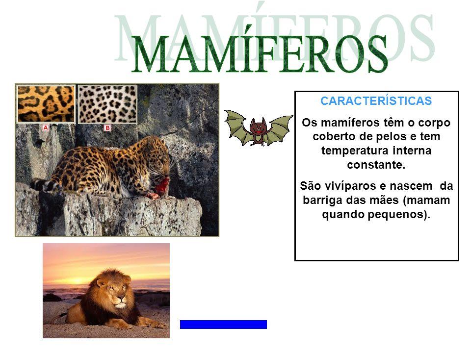 CARACTERÍSTICAS Os mamíferos têm o corpo coberto de pelos e tem temperatura interna constante. São vivíparos e nascem da barriga das mães (mamam quand