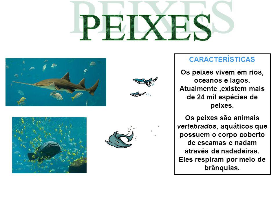 CARACTERÍSTICAS Os peixes vivem em rios, oceanos e lagos. Atualmente,existem mais de 24 mil espécies de peixes. Os peixes são animais vertebrados, aqu