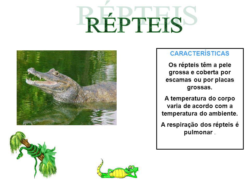 CARACTERÍSTICAS Os répteis têm a pele grossa e coberta por escamas ou por placas grossas. A temperatura do corpo varia de acordo com a temperatura do