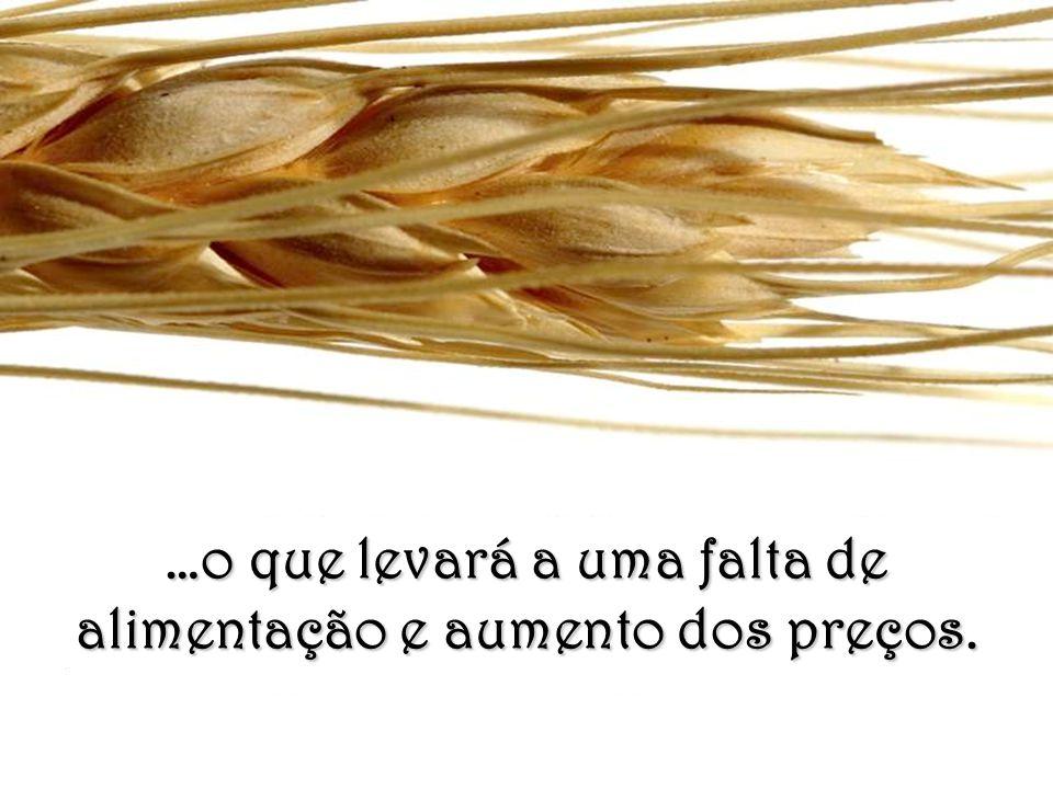 Isto poderá originar baixas significativas na produção de cereais…