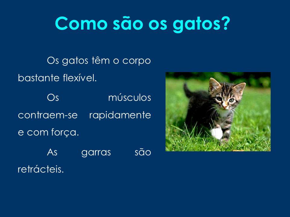 Gatos domésticos Os gatos domésticos são pequenos mamíferos carnívoros da família dos Felídeos (ou felinos), muito popular como animal de estimação.