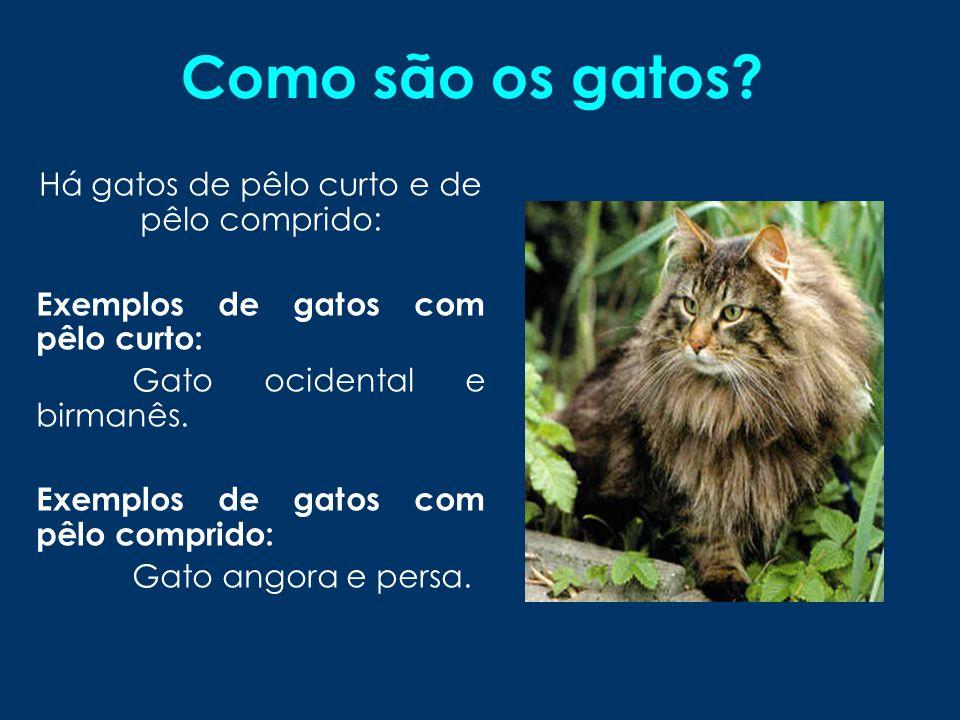 Quanto pesam os gatos.