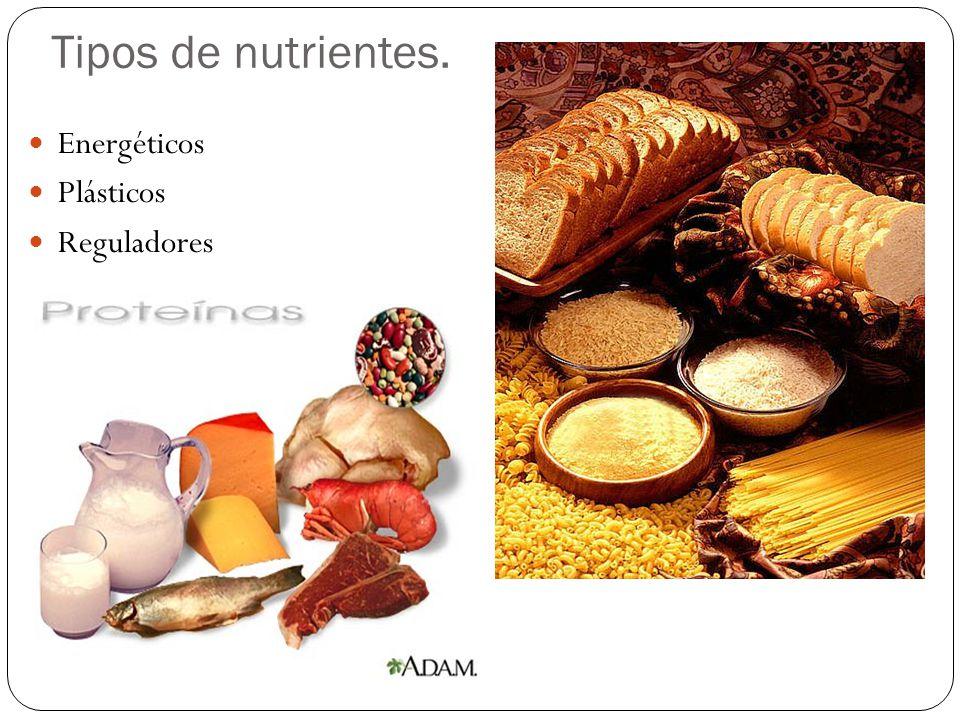Tipos de nutrientes. Energéticos Plásticos Reguladores