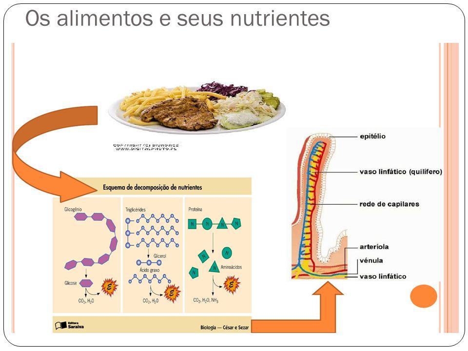 Os alimentos e seus nutrientes