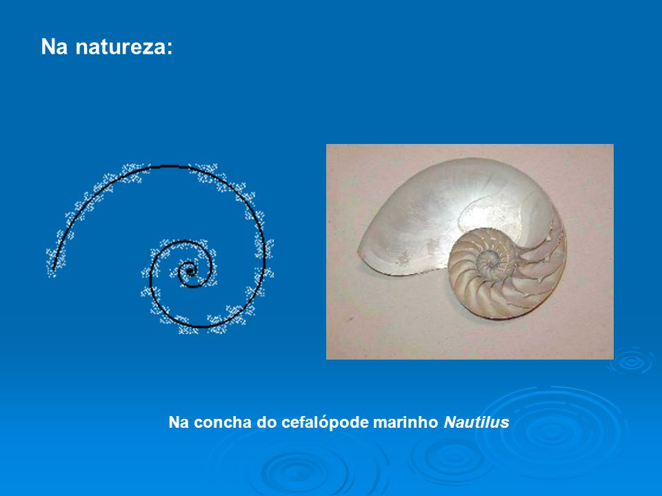 Na natureza: Na concha do cefalópode marinho Nautilus
