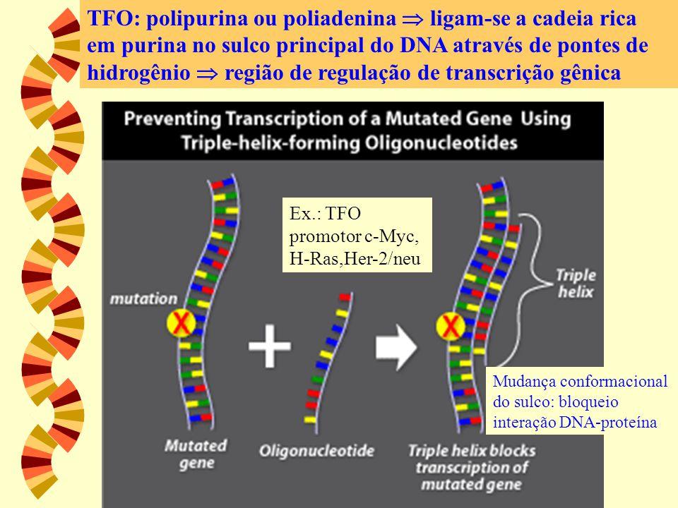 TFO TFO: polipurina ou poliadenina  ligam-se a cadeia rica em purina no sulco principal do DNA através de pontes de hidrogênio  região de regulação