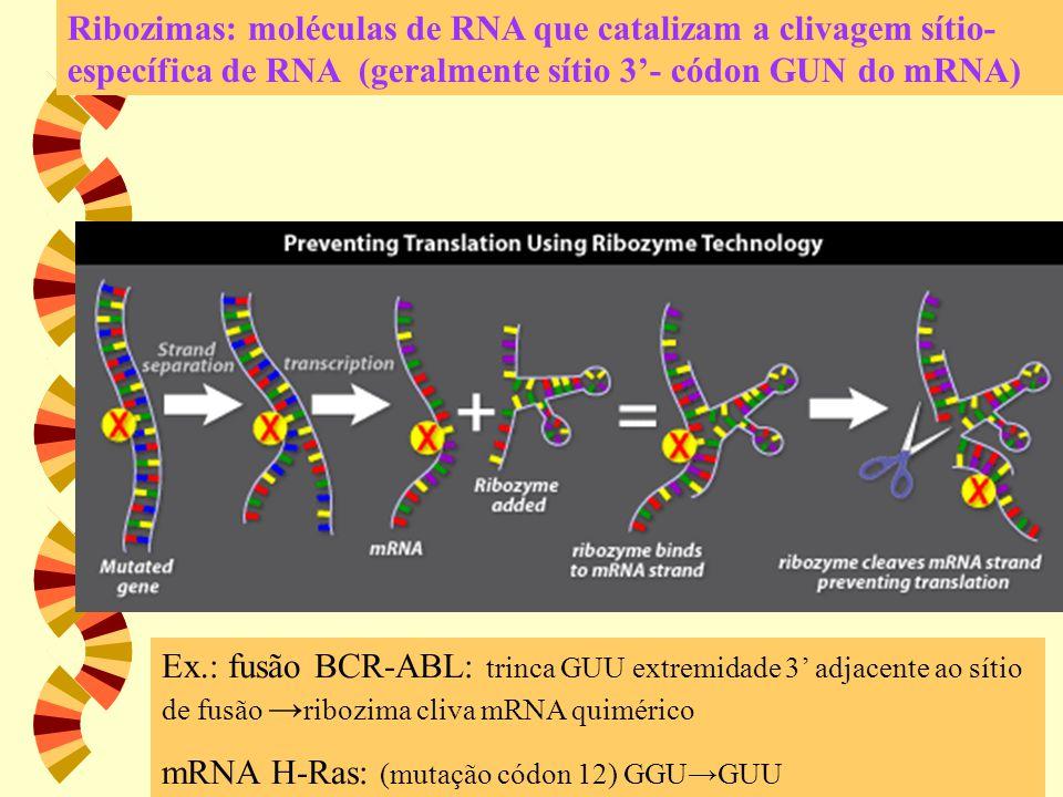 Ribozimas: moléculas de RNA que catalizam a clivagem sítio- específica de RNA (geralmente sítio 3'- códon GUN do mRNA) Ex.: fusão BCR-ABL: trinca GUU