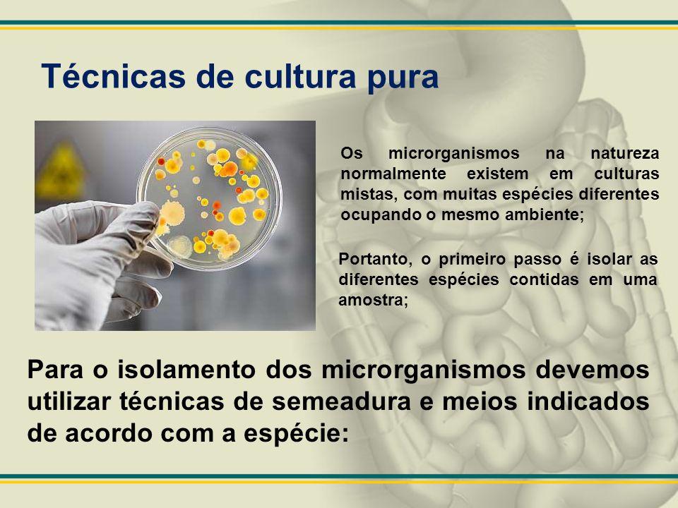 Técnicas de cultura pura Os microrganismos na natureza normalmente existem em culturas mistas, com muitas espécies diferentes ocupando o mesmo ambient