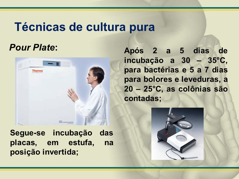 Pour Plate: Segue-se incubação das placas, em estufa, na posição invertida; Após 2 a 5 dias de incubação a 30 – 35°C, para bactérias e 5 a 7 dias para