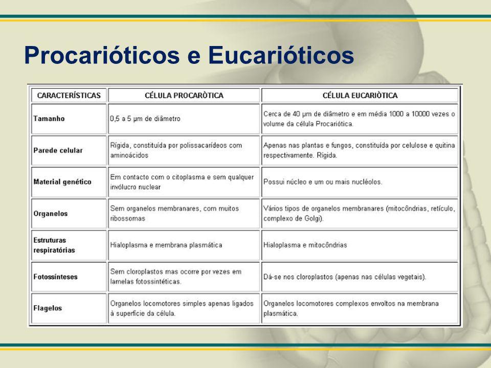 Procarióticos e Eucarióticos