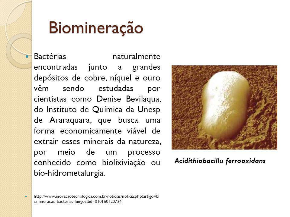 Biomineração Bactérias naturalmente encontradas junto a grandes depósitos de cobre, níquel e ouro vêm sendo estudadas por cientistas como Denise Bevil