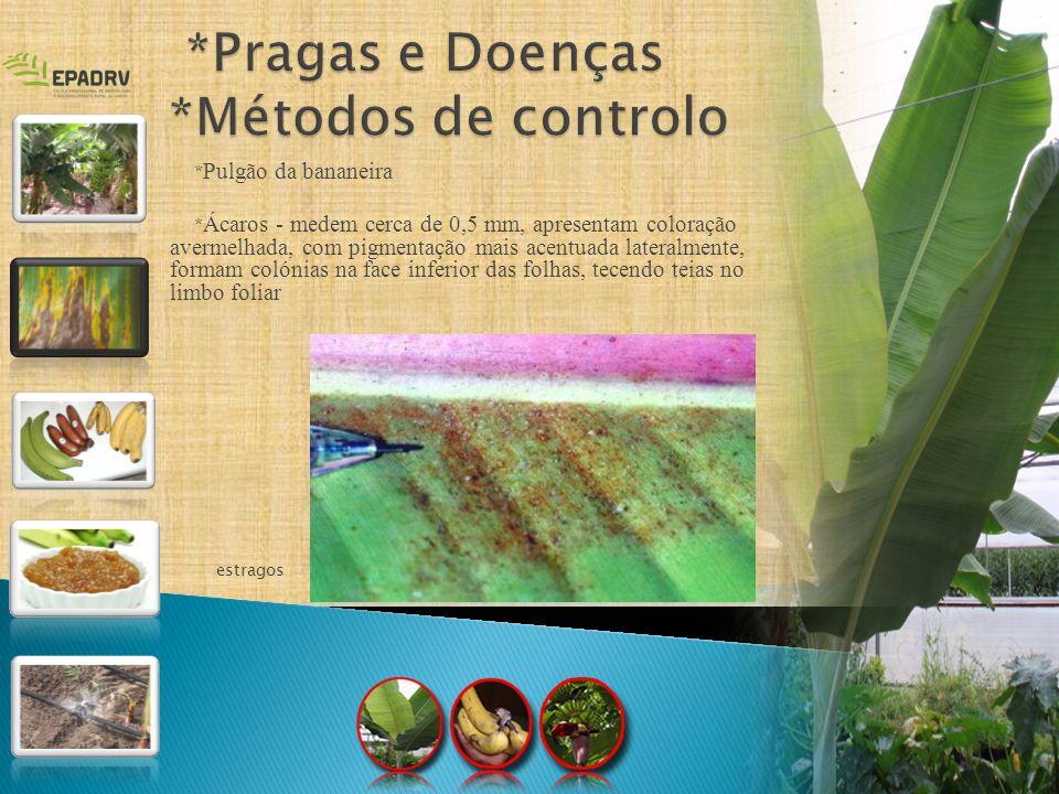 * Pulgão da bananeira * Ácaros - medem cerca de 0,5 mm, apresentam coloração avermelhada, com pigmentação mais acentuada lateralmente, formam colónias