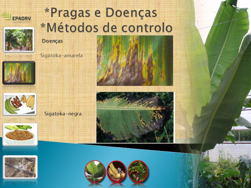 Doenças Sigatoka-amarela Sigatoka-negra