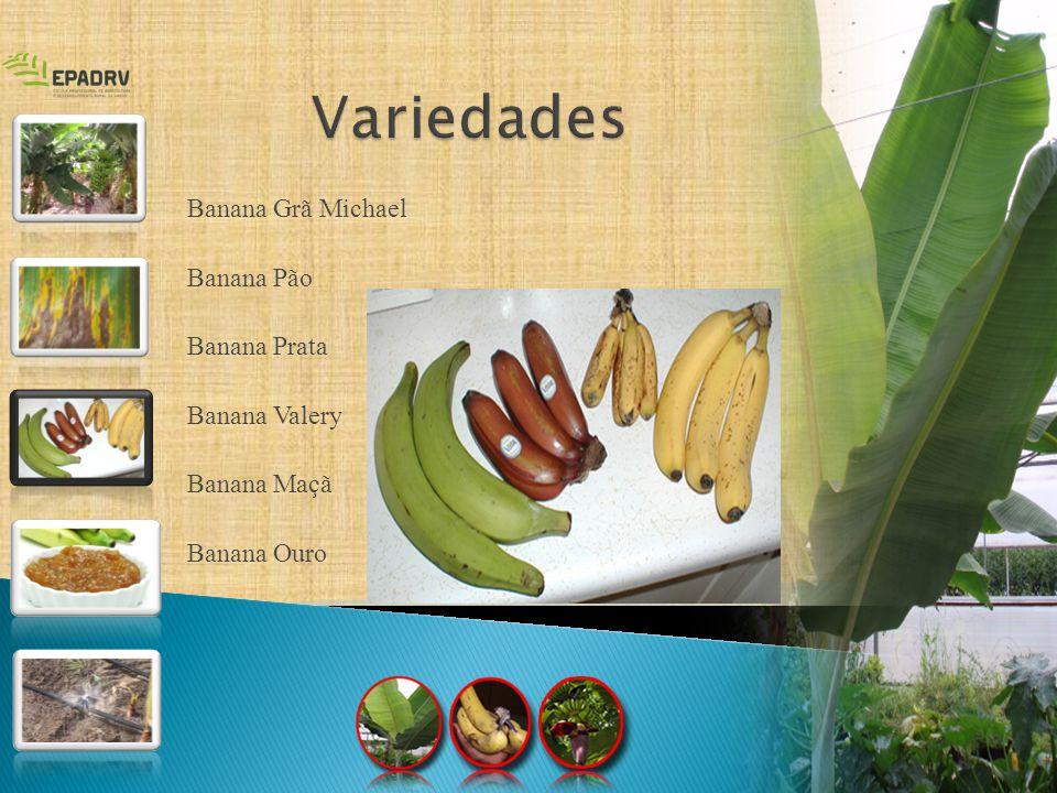 As bananas constituem o quarto produto alimentar mais produzido no mundo, a seguir do; arroz; trigo; milho; cultivadas em 130 países e originárias de sudeste da Ásia África América de Sul Na alimentação Na alimentação