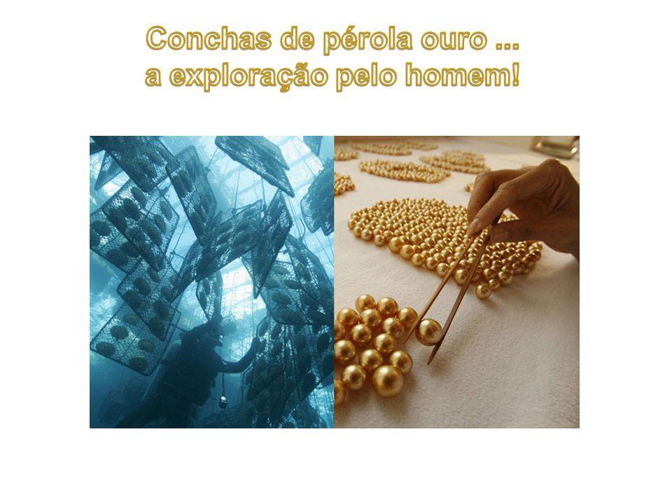 Jóias de pérolas de ouro.