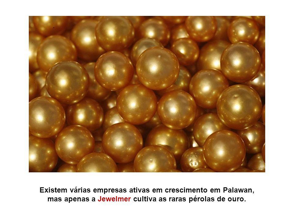 Existem várias empresas ativas em crescimento em Palawan, mas apenas a Jewelmer cultiva as raras pérolas de ouro.